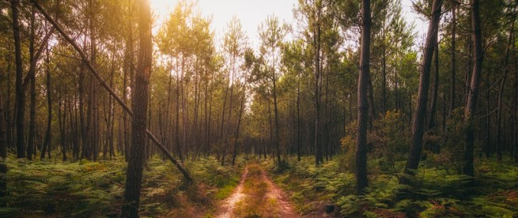 À la découverte de la Forêt Landaise